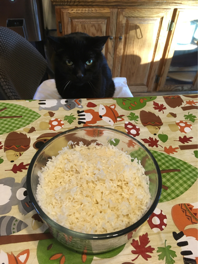 perfectly cooked sous vide rice with cat